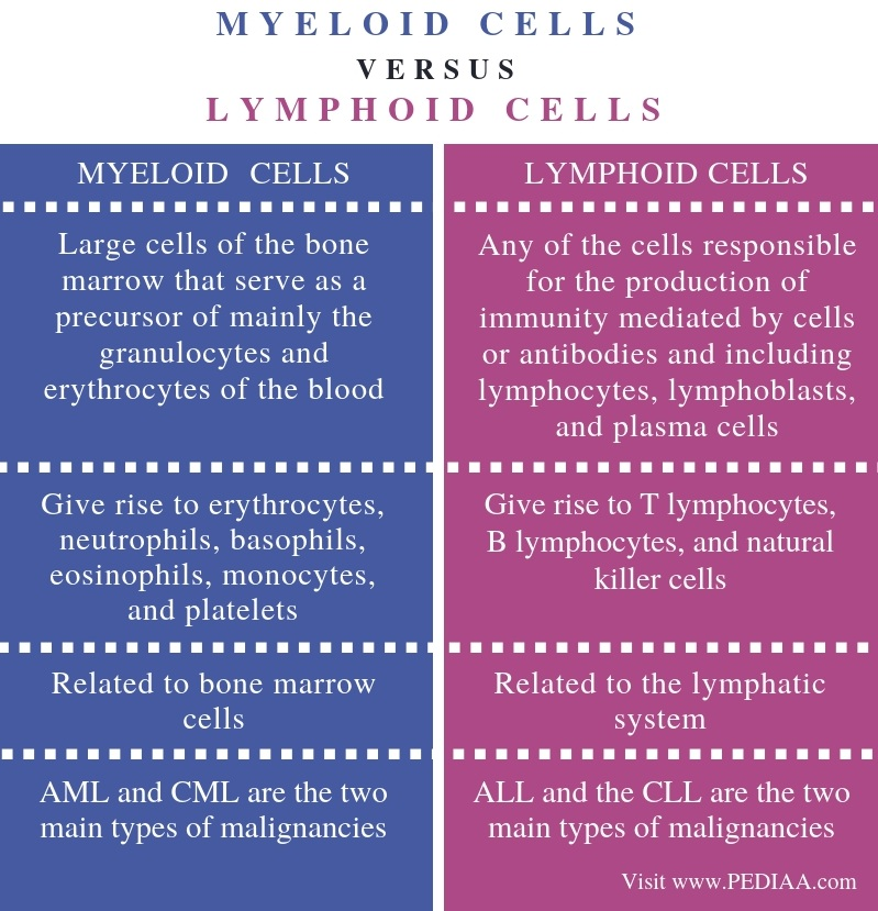 Difference Between Myeloid and Lymphoid Cells - Comparison Summary