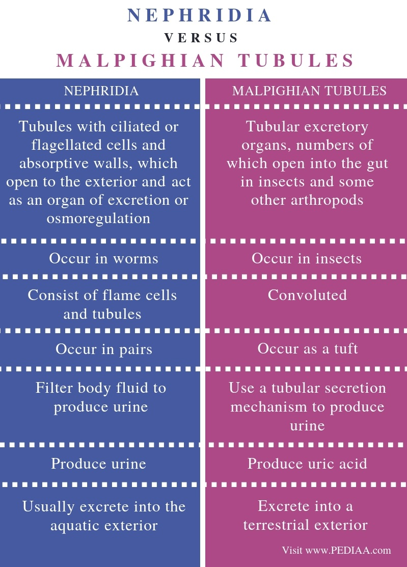 Difference Between Nephridia and Malpighian Tubules - Comparison Summary