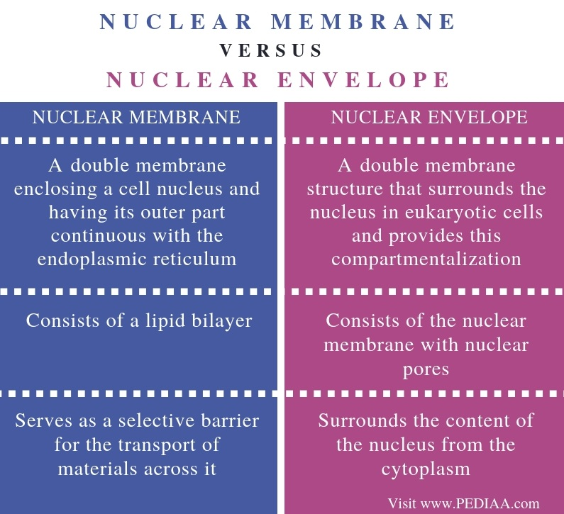 Difference Between Nuclear Membrane and Nuclear Envelope - Comparison Summary