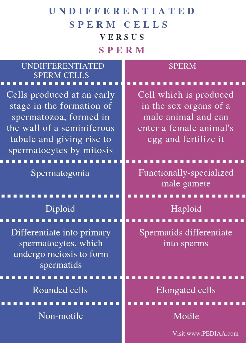 Difference Between Undifferentiated Sperm Cells and Sperm - Comparison Summary