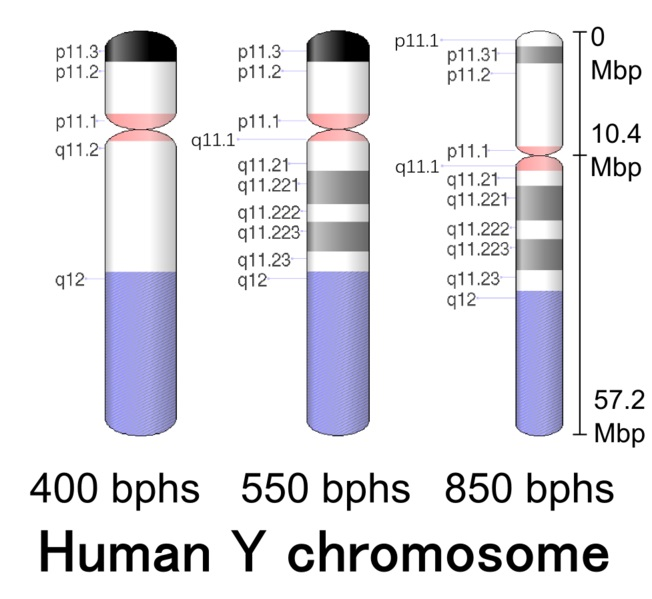 Difference Between Y DNA and mtDNA_Fig 01