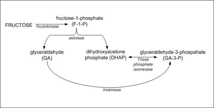 Main Difference - Glucose and Fructose Metabolism