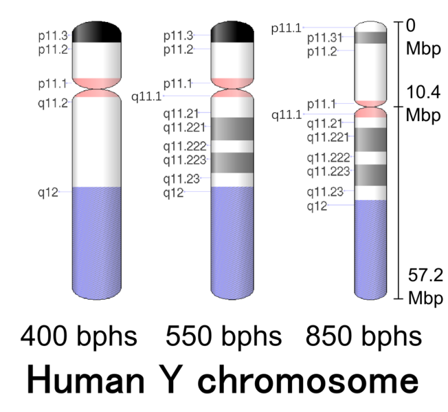 Difference Between Maternal and Paternal Chromosomes_Figure 2