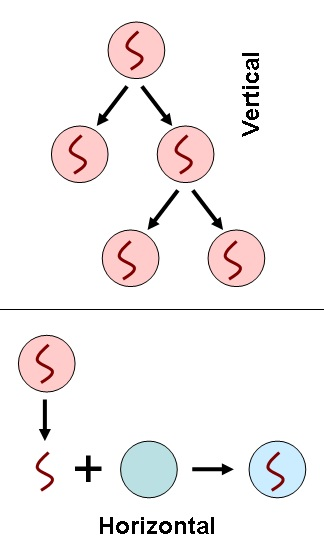 Difference Between Vertical and Horizontal Gene Transfer_Fig 01