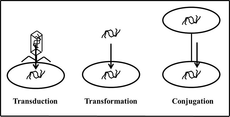 Difference Between Vertical and Horizontal Gene Transfer_Fig 02
