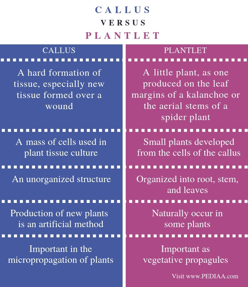 Difference Between Callus and Plantlet - Comparison Summary