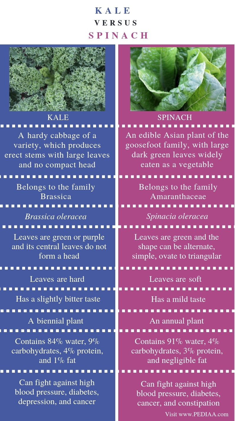 Difference Between Kale and Spinach- Comparison Summary