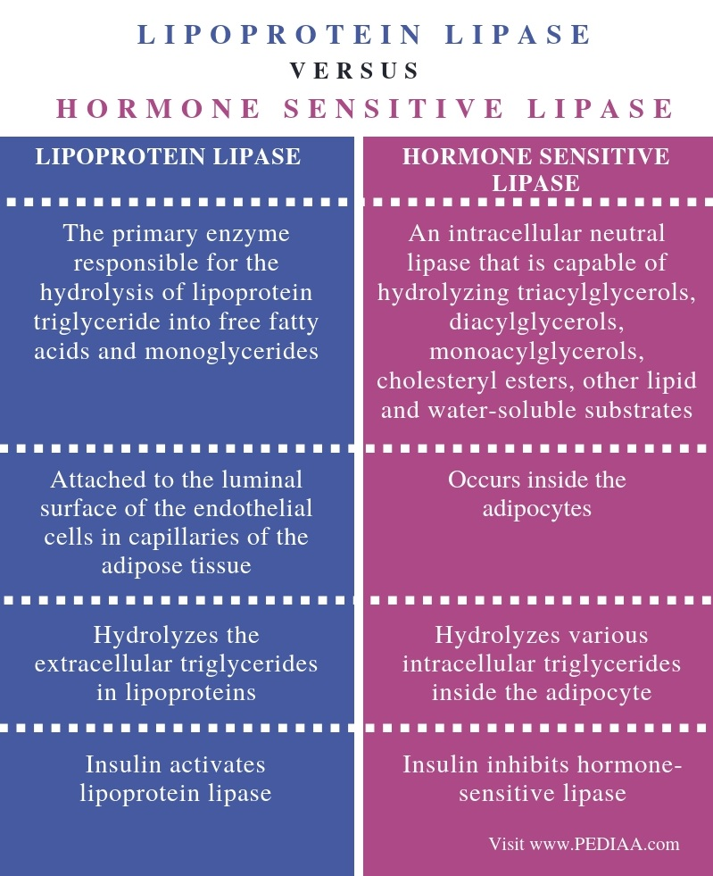 Difference Between Lipoprotein Lipase and Hormone Sensitive Lipase - Comparison Summary