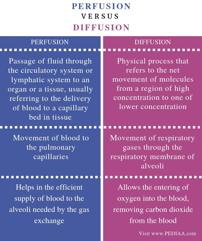 Difference Between Perfusion and Diffusion - Comparison Summary