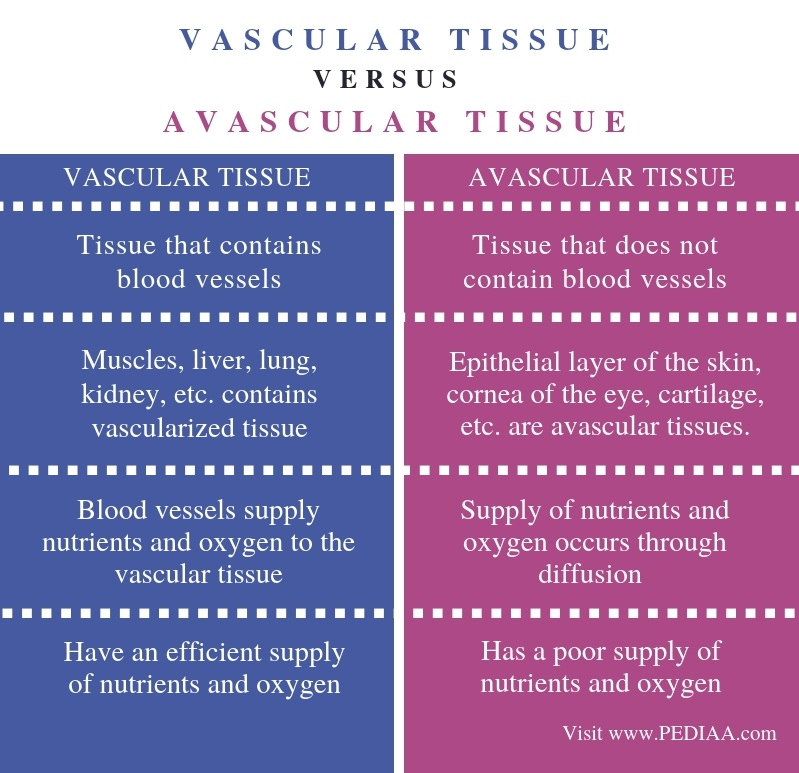 Difference Between Vascular and Avascular Tissue - Comparison Summary