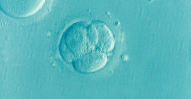 Difference Between Egg Freezing and Embryo Freezing