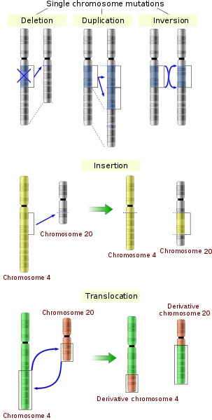 Difference Between Induced and Spontaneous Mutation