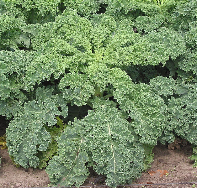 What is the Difference Between Kale and Spinach