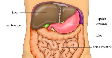 What is the Difference Between Liver and Gallbladder