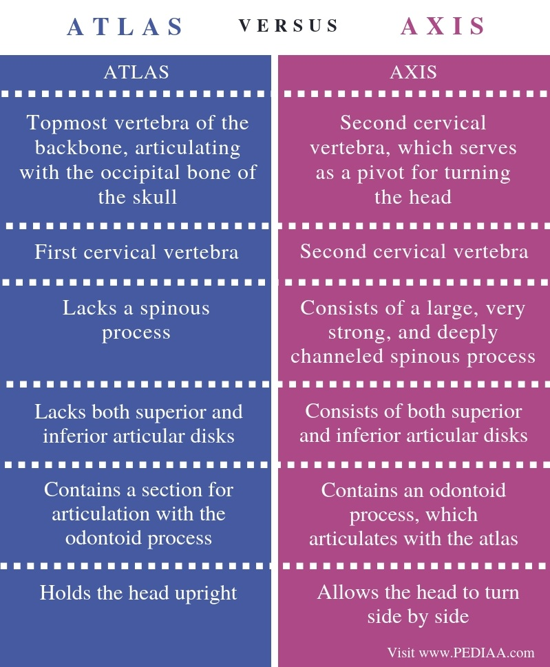 Difference Between Atlas and Axis - Comparison Summary