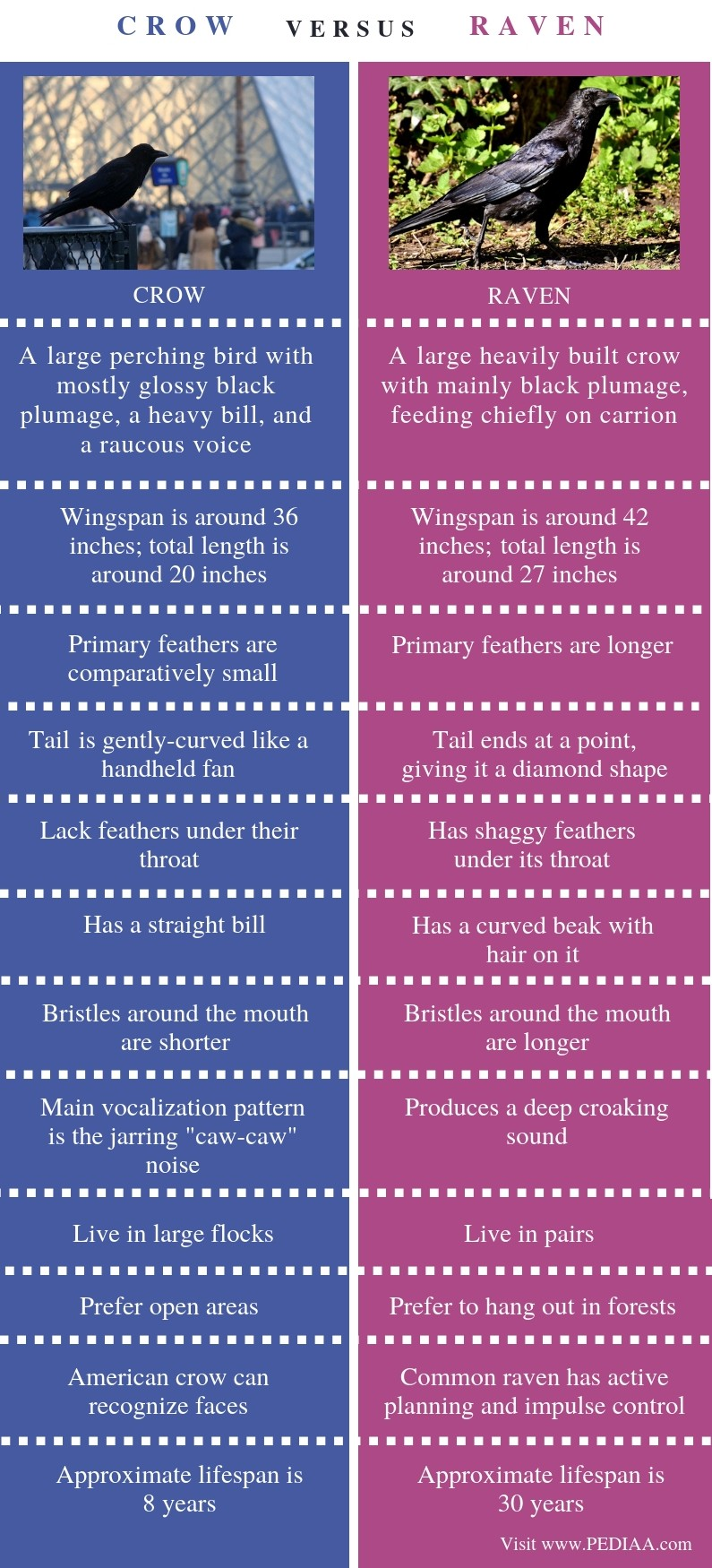 Difference Between Crow and Raven- Comparison Summary
