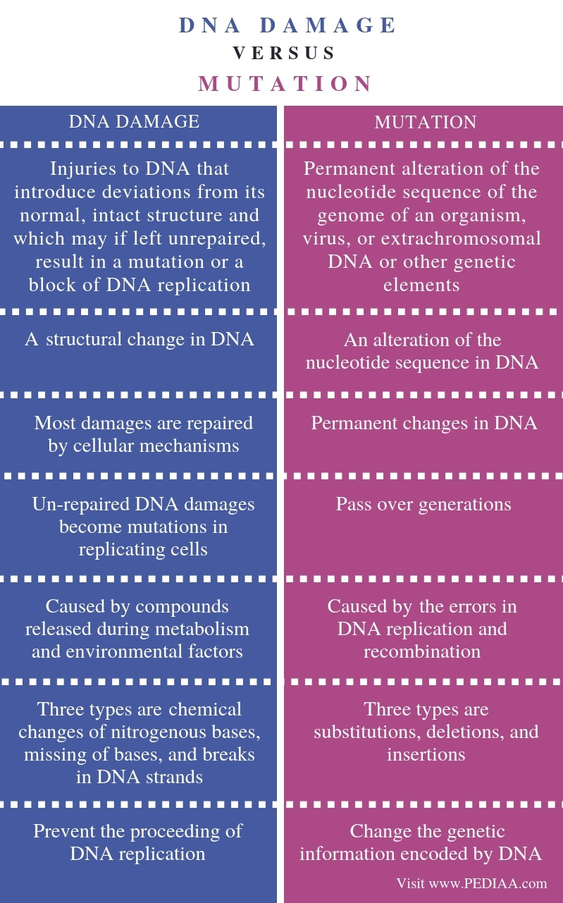 Difference Between DNA Damage and Mutation - Comparison Summary