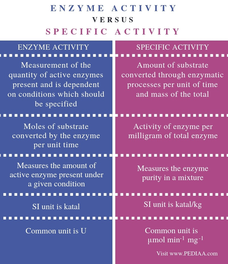 Difference Between Enzyme Activity and Specific Activity - Comparison Summary