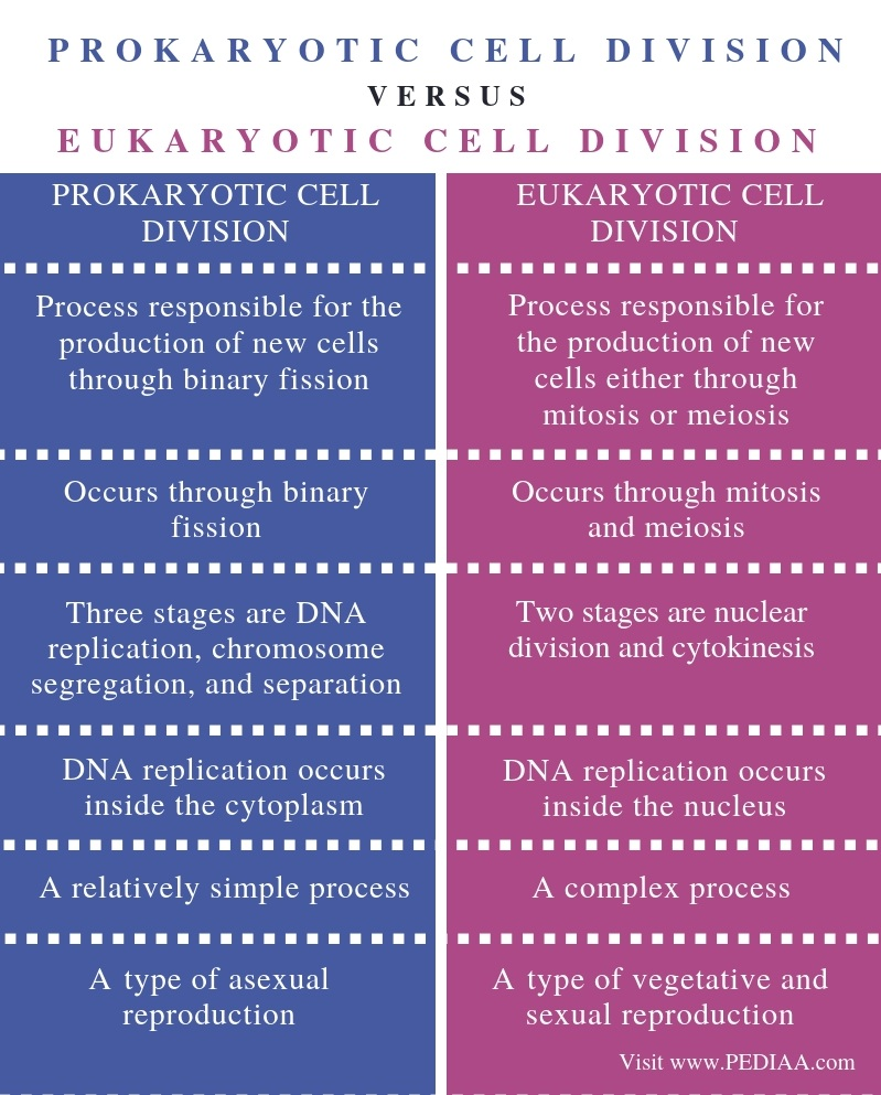 Difference Between Prokaryotic and Eukaryotic Cell Division- Comparison Summary