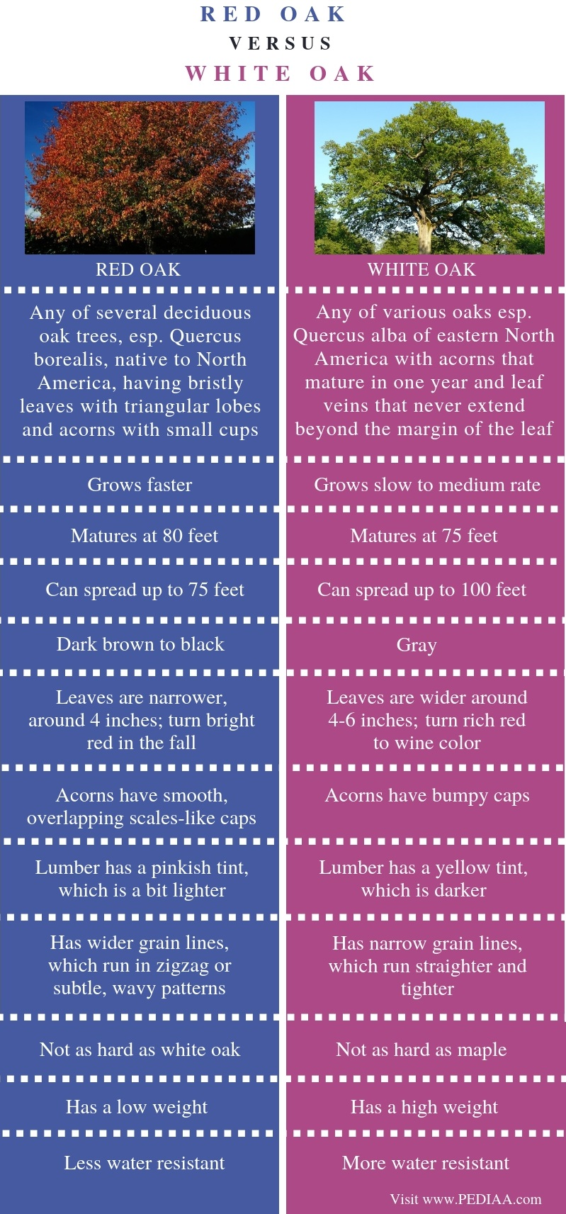Difference Between Red Oak and White Oak - Comparison Summary