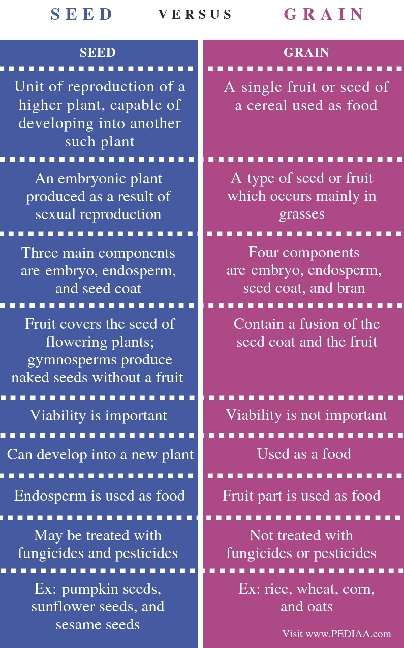 Difference Between Seed and Grain- Comparison Summary