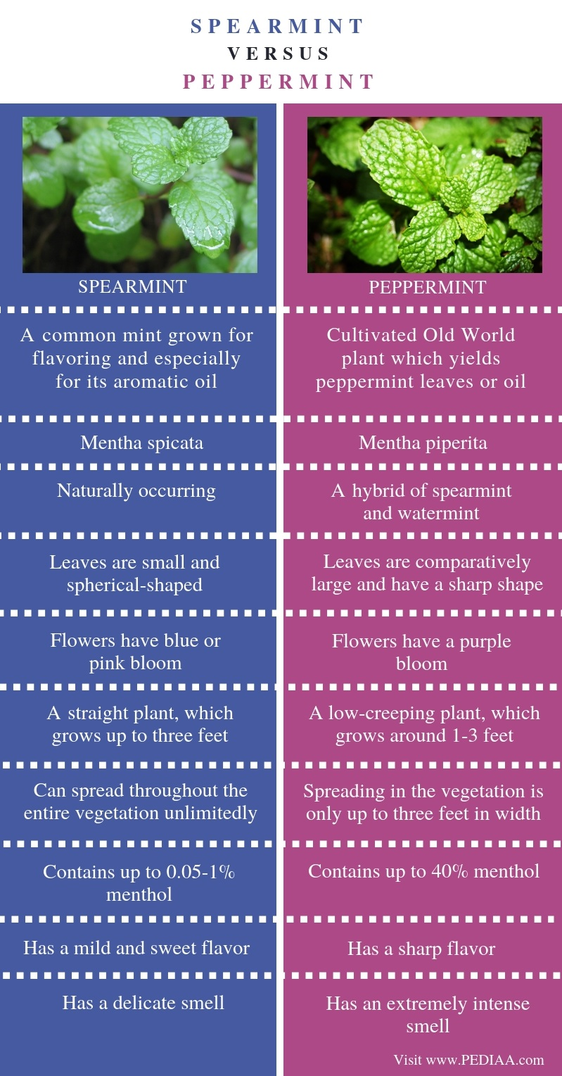 Difference Between Spearmint and Peppermint - Comparison Summary