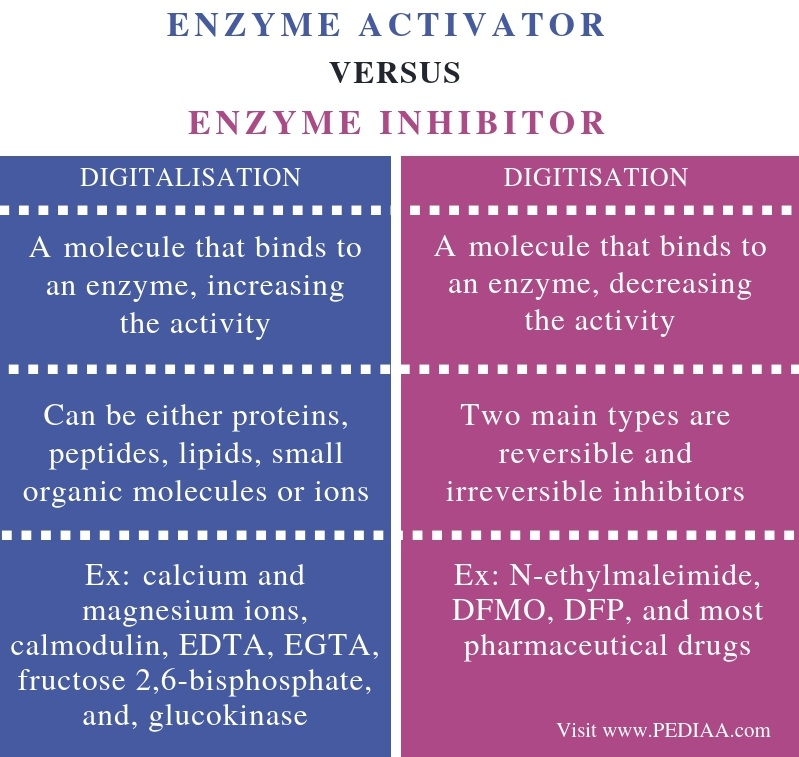 Differences Between Enzyme Activator and Enzyme Inhibitor - Comparison Summary