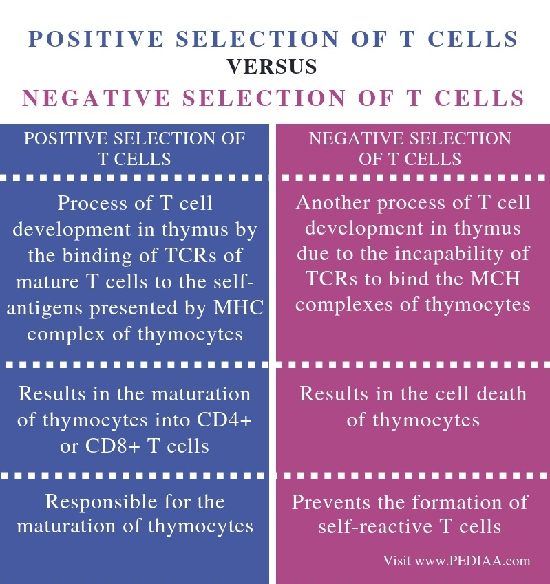 Differences Between Positive and Negative Selection of T Cells - Comparison Summary