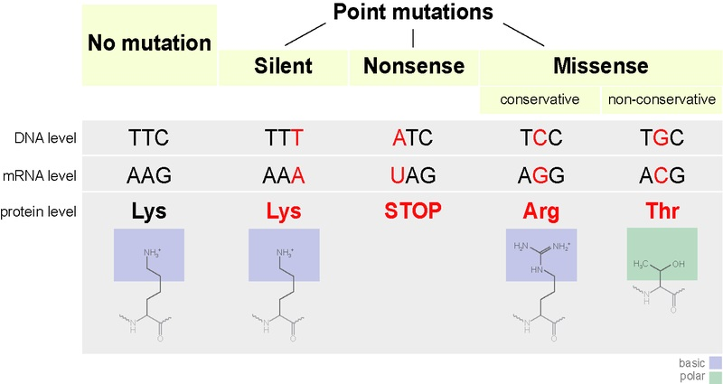 Main Difference - DNA Damage and Mutation