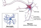 What is the Difference Between Nervous Tissue and Nervous System