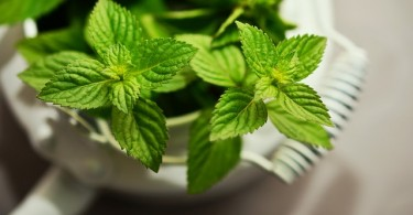 Difference Between Spearmint and Peppermint