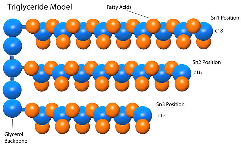 What is the Difference Between Triacylglycerol and Triglyceride