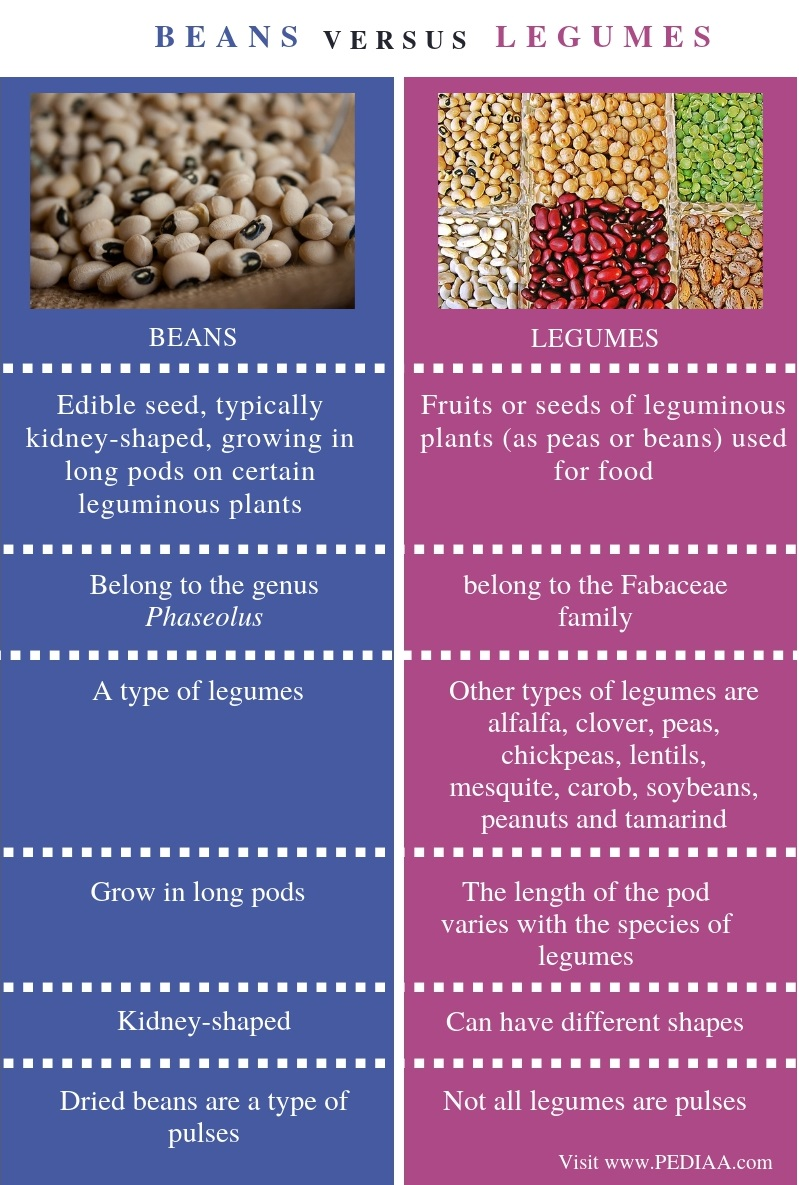 Difference Between Beans and Legumes - Comparison Summary