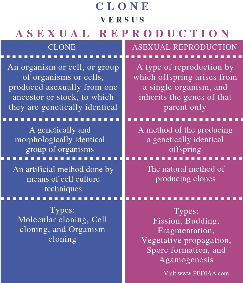 Difference Between Clone and Asexual Reproduction - Comparison Summary