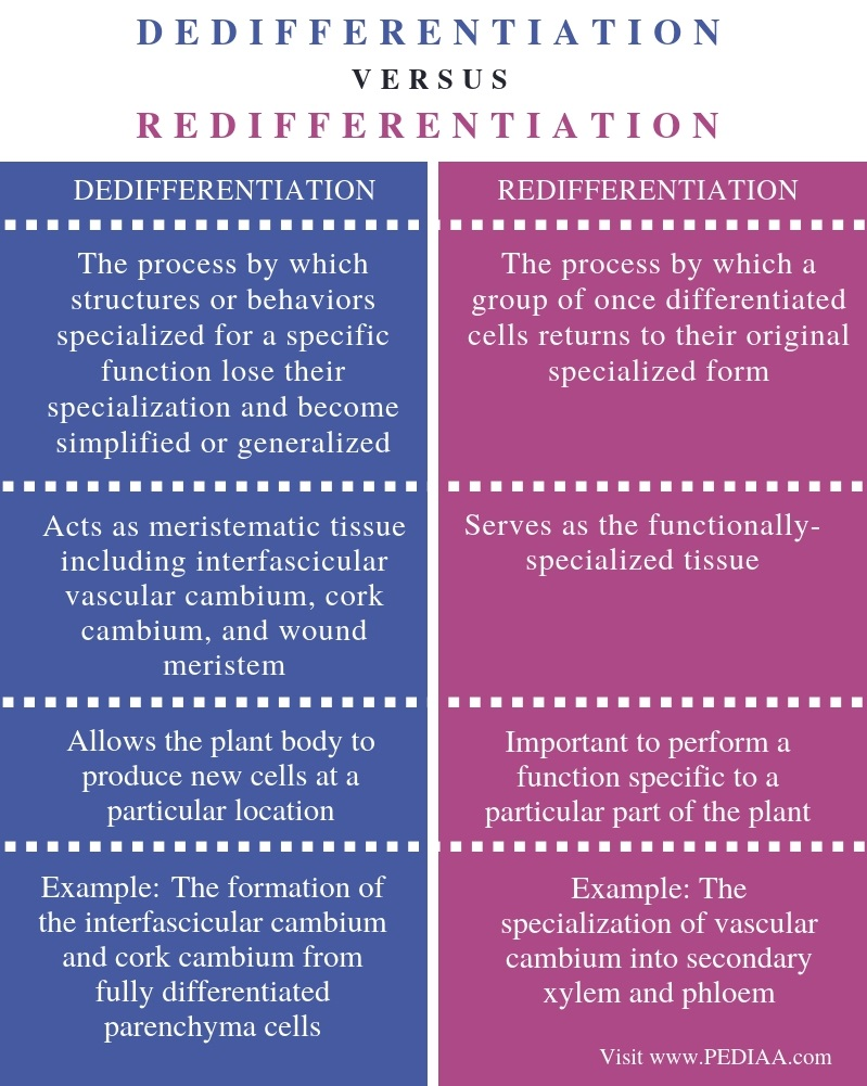 Difference Between Dedifferentiation and Redifferentiation - Comparison Summary