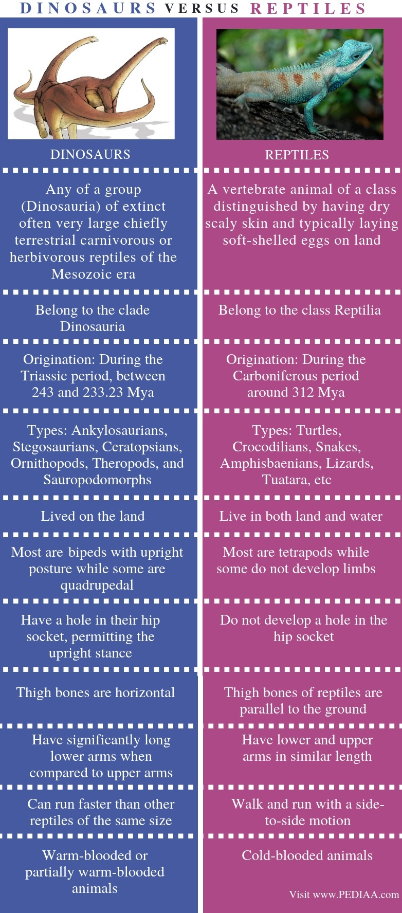 Difference Between Dinosaurs and Reptiles - Comparison Summary