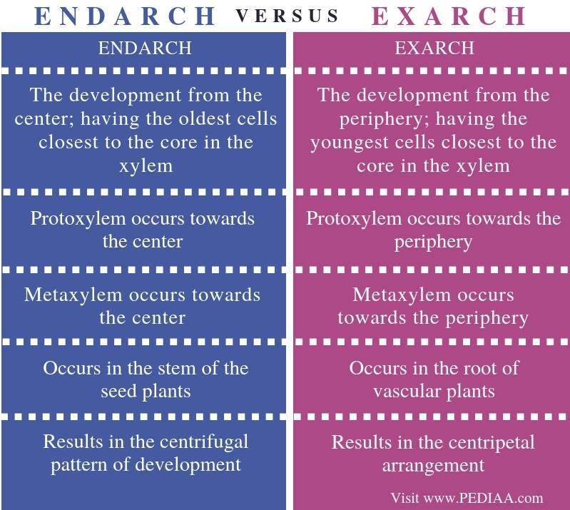 Difference Between Endarch and Exarch - Comparison Summary