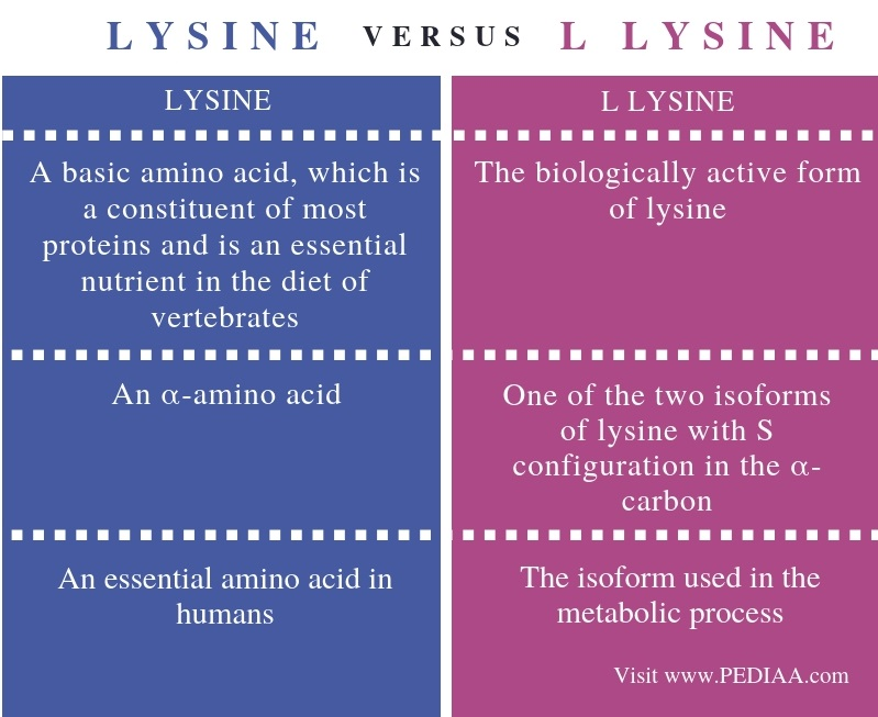 Difference Between Lysine and L Lysine - Comparison Summary