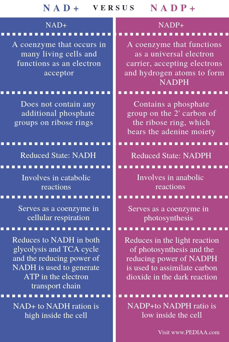 Difference Between NAD+ and NADP+ - Comparison Summary