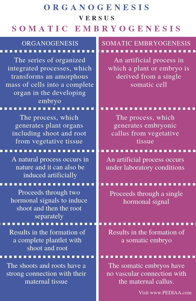 Difference Between Organogenesis and Somatic Embryogenesis - Comparison Summary