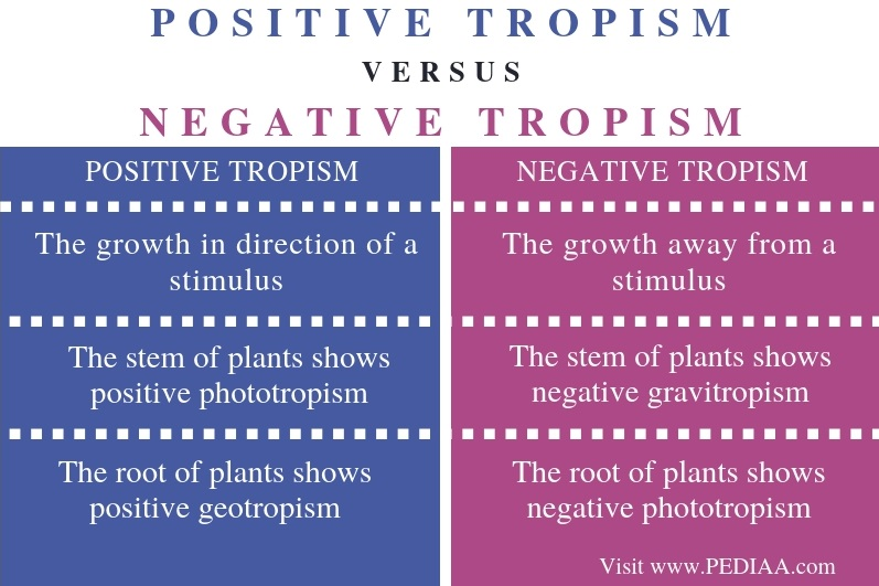 Difference Between Positive and Negative Tropism - Comparison Summary