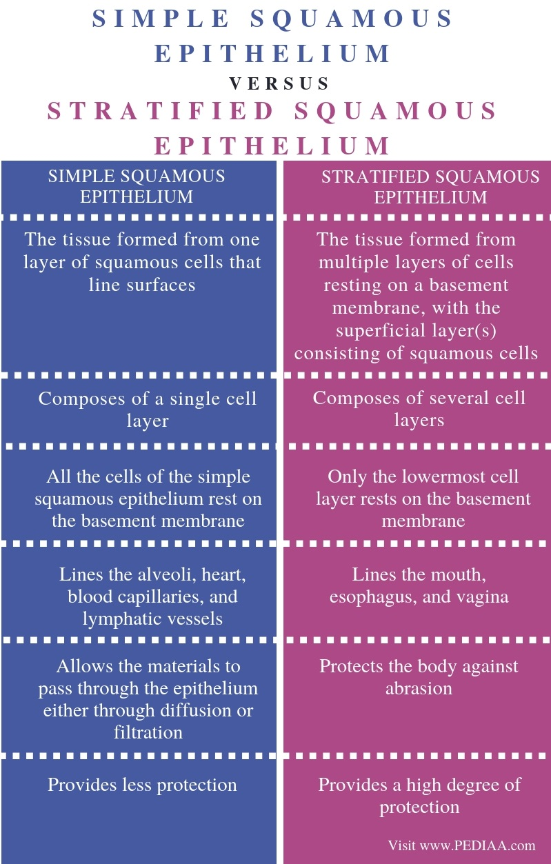 Difference Between Simple Squamous Epithelium and Stratified Squamous Epithelium - Comparison Summary