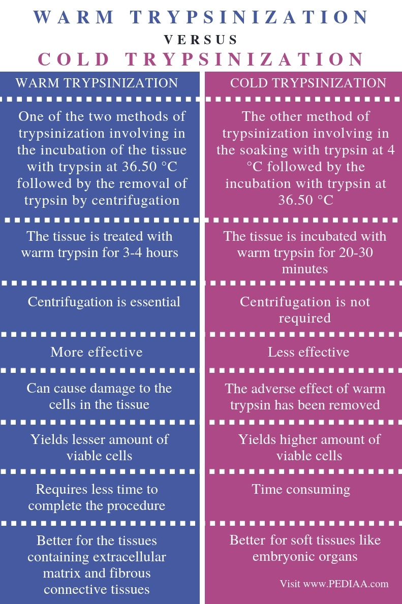 Difference Between Warm and Cold Trypsinization - Comparison Summary