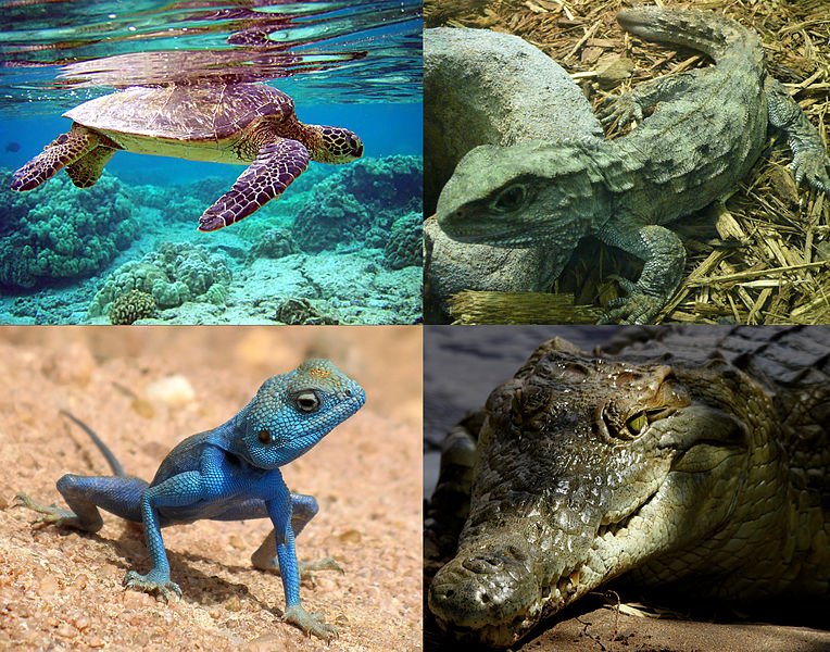 Difference Between Dinosaurs and Reptiles