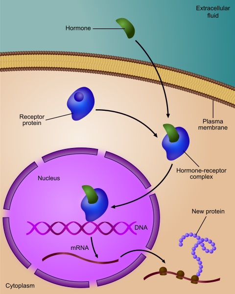 Difference Between Gene Expression and Gene Regulation