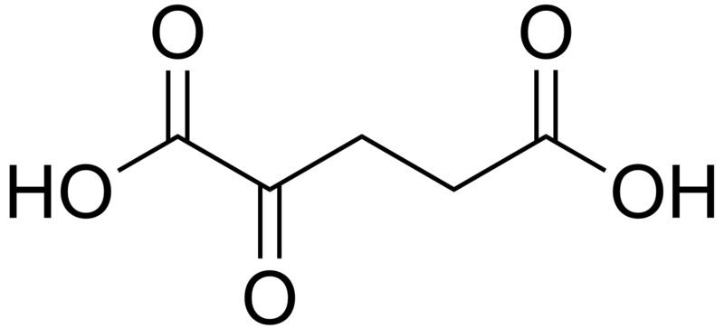 Difference Between L Arginine and Arginine AKG