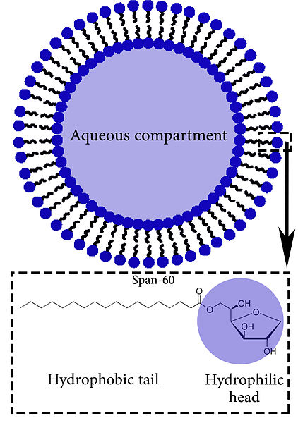 Difference Between Liposomes and Niosomes