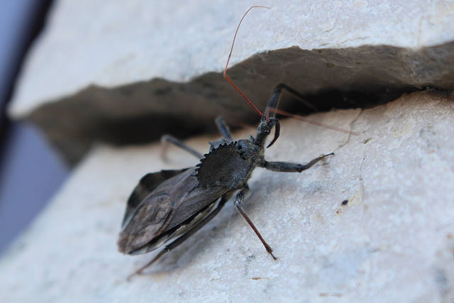 What is the Difference Between a Bug and a Beetle