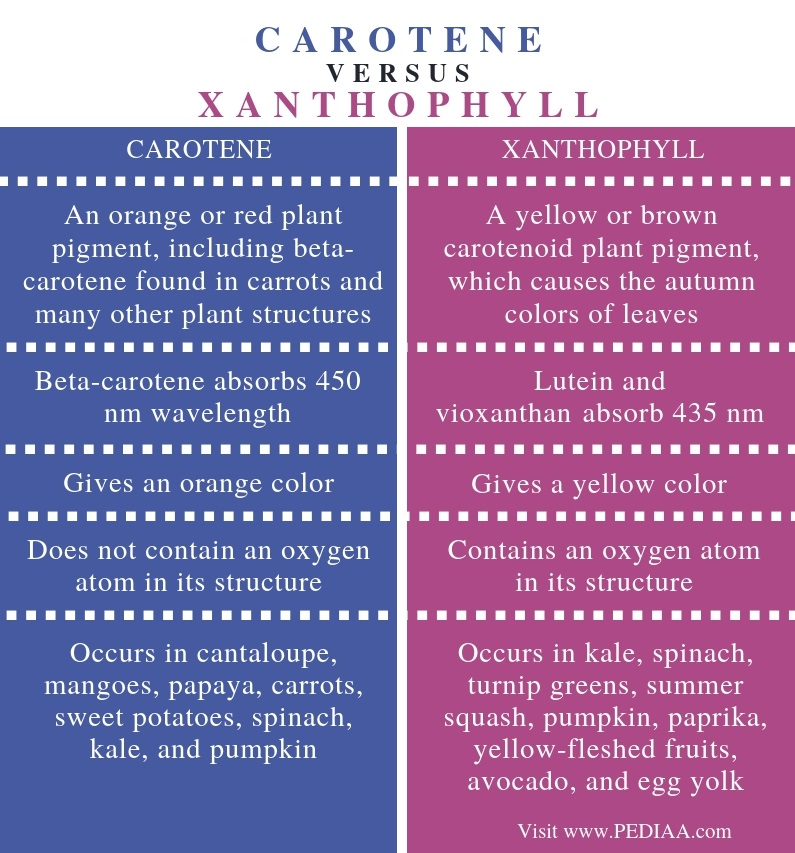 Difference Between Carotene and Xanthophyll - Comparison Summary (3)