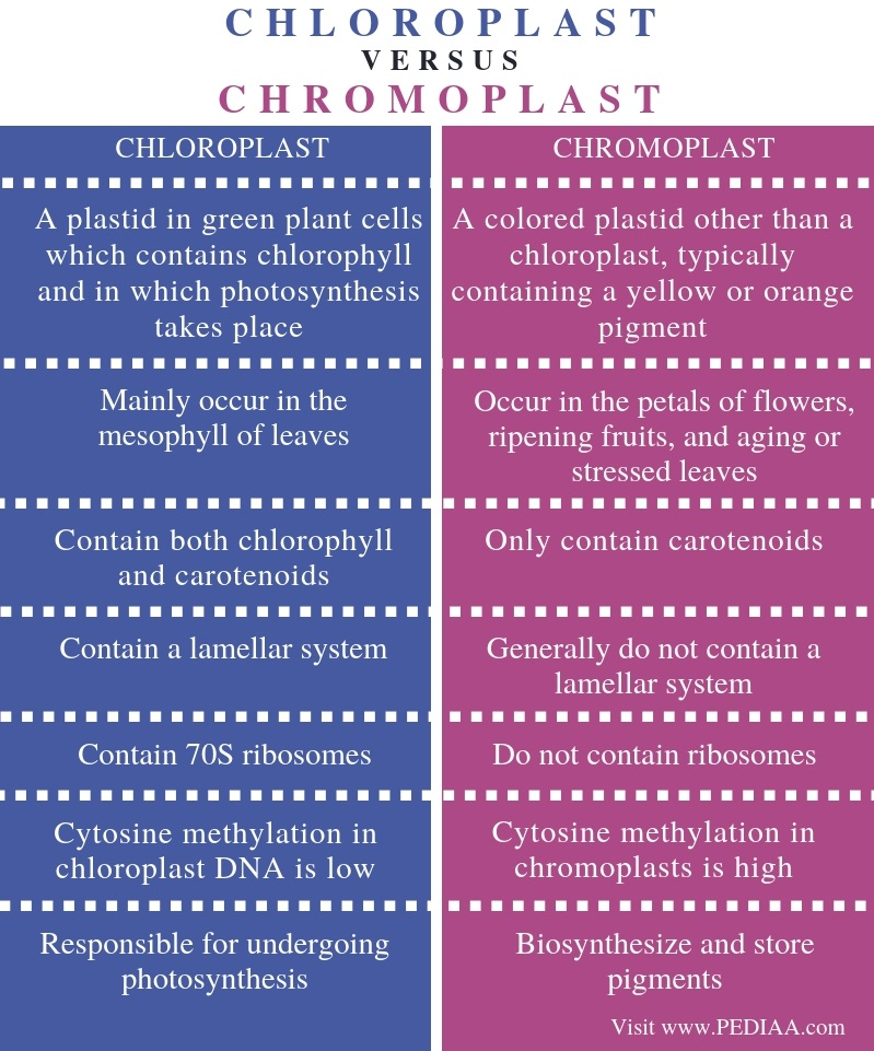 Difference Between Chloroplast and Chromoplast - Comparison Summary